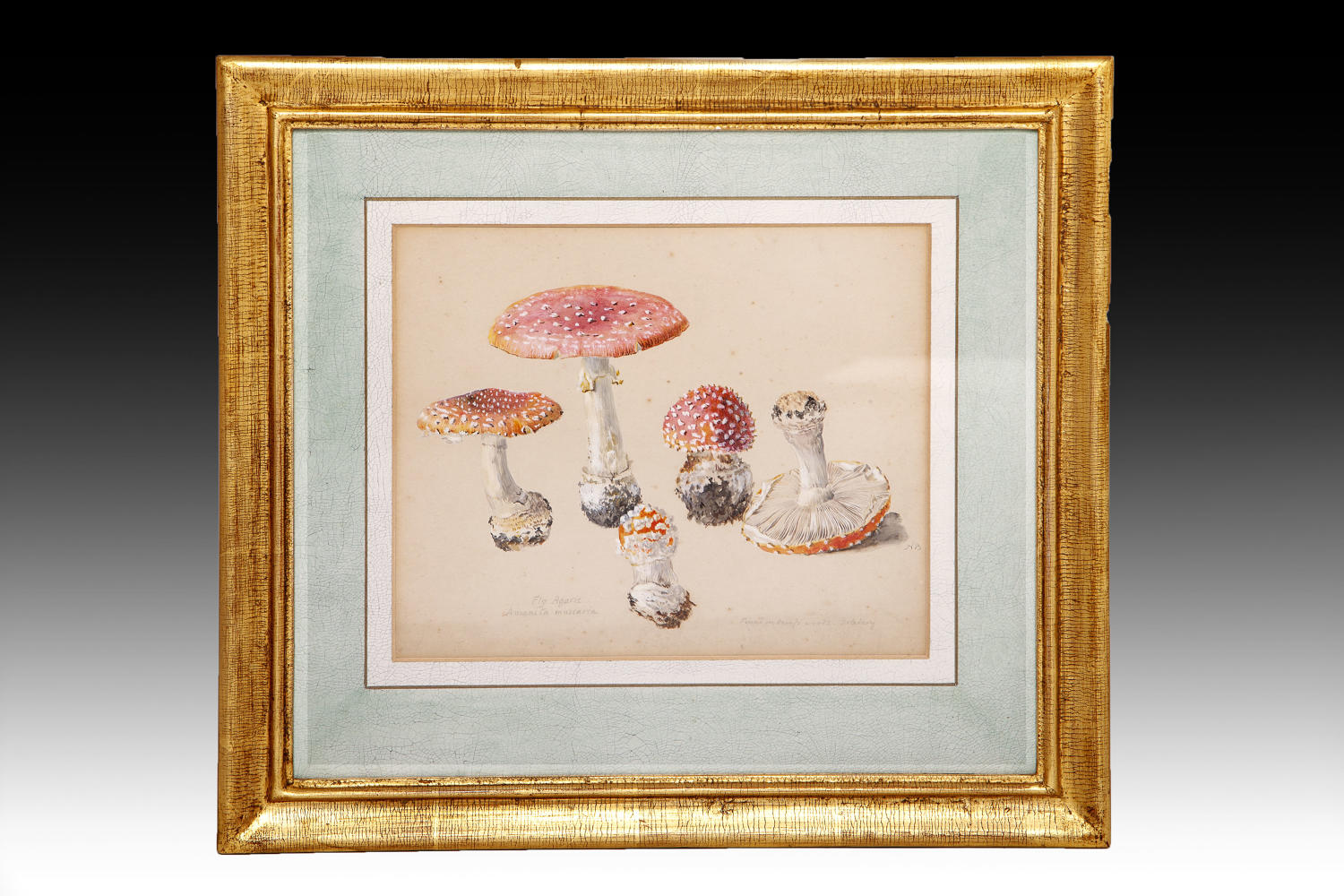 An early 19th century watercolour of toadstools