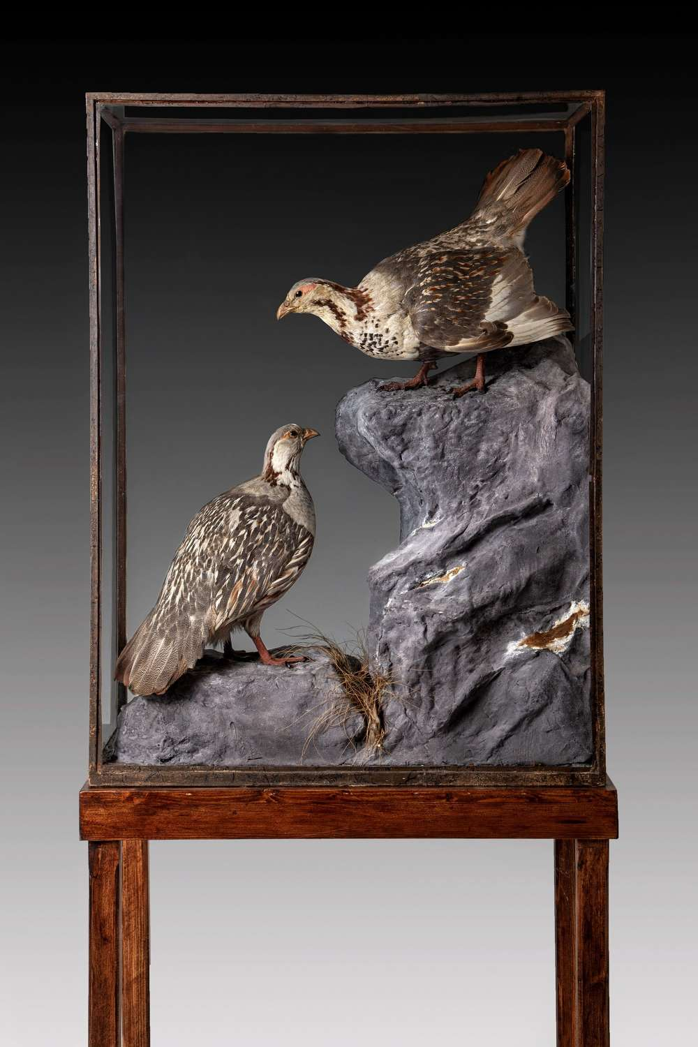 A Rare pair of taxidermy cabinets of snow cocks